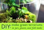 DIY-Glass-Terrariums