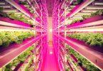 indoor-farm-japan-interior